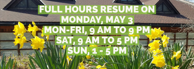Image of library building and daffodil flowers with new in-person hours, monday - friday, 9 AM to 9 PM, saturday 9 AM to 5 PM, sunday, 1 to 5 PM. Full hours resume Monday, May 3